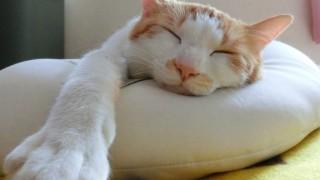 食欲の秋!食べ過ぎは快眠を妨げるので注意が必要です。